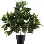 Block & Chisel fricus tree in plastic pot