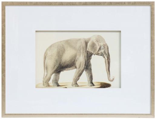 Block & Chisel elephant print