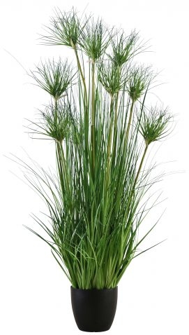 Block & Chisel bamboo grass tree in plastic pot
