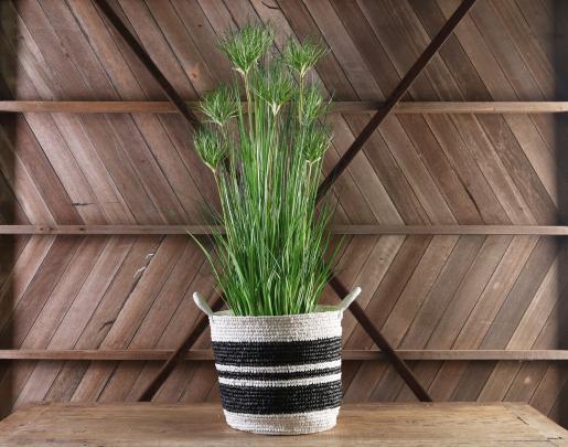 Block & Chisel bamboo grass tree in plastic pot