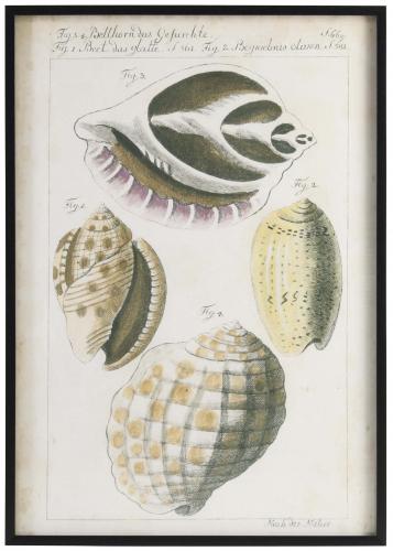Block & Chisel framed shell print