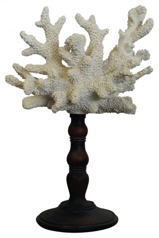 Block & Chisel white coral on stand