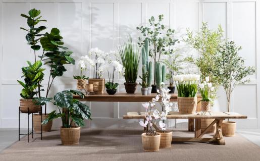 Green cactus houseplant with grey pot