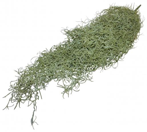 Block & Chisel tilancia silk bush