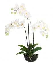 White faux artificial orchid plant flower in black round pot