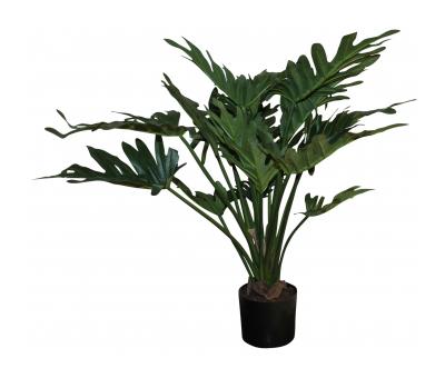 Block & Chisel philodendron selloum