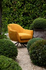 Swivel tub chair with black metal legs upholstered in a orange fabric.