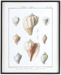 Block & Chisel framed shell print